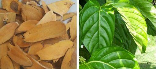 Rễ và lá đều có thể làm thuốc
