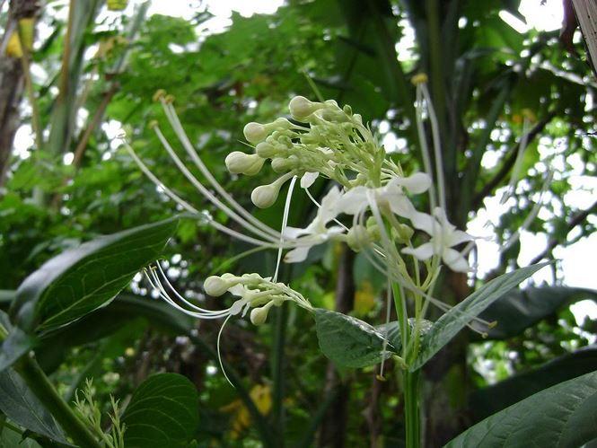 Lá cây được ứng dụng rộng rãi trong việc chữa bệnh